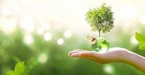 Net-Zero Emissions Greenhouse Gas - Hand holding globe with tree
