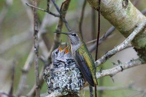 Pipeline Expansion on Hiatus | Birds Nest Protection